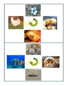 Life cycles 1