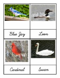 Ontario Birds 1
