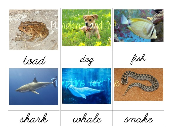 Types of Vertebrates 1